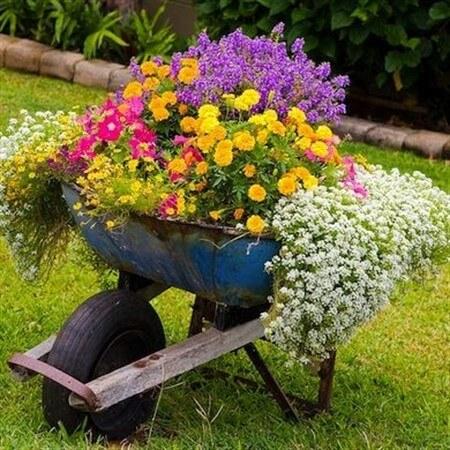 как посадить цветы в саду красиво фото